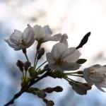 江戸時代の人間関係と性風俗との関係